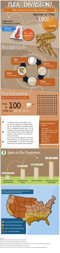 Flea invasion #infographic