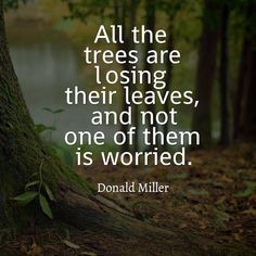 Nature Quotes Interesting To Walk In Nature Wordssamantha  Pinterest