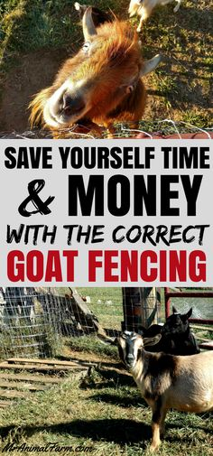 Goat Fencing. Putting up proper goat fencing can save time and money. Make sure that your goat fencing will hold your goats in and keep them safe by choosing the right fencing for goats to start.