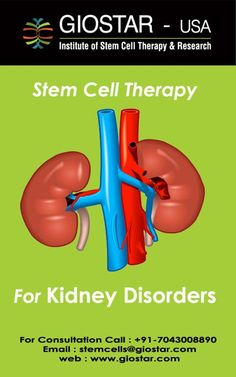 #Kidney #Disease Treatment  #Kidney diseases occur when one suffers from a gradual and usually permanent loss of kidney function over time. Kidney disorders are one of the cosmopolitan diseases affecting many people.  Email: stemcells@giostar.com |  Website: http://www.giostar.com/
