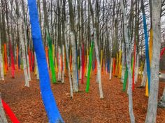 "Unique Attraction in Romania: the ""Color Forest"" between Targu Jiu and Ramnicu Valcea Paradise Garden, Self Discovery, Eastern Europe, Art Forms, Romania, Unique Art, Attraction, How Are You Feeling, Things To Come"