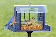 Bird-Safe® Bluebird Haven Feeder with Pole - bet I could make one! Bird House Feeder, Bird Feeders, Wild Bird Food, Wild Birds, Santa Fe Ranch, Bird Houses Diy, Bluebird Houses, Inside Plants, Bird Boxes