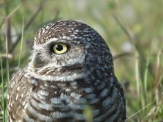 Discover the unique and authenthic photography of Tonestbye on EyeEm Owl, Bird, Nature, Photography, Animals, Animais, Naturaleza, Fotografie, Animales