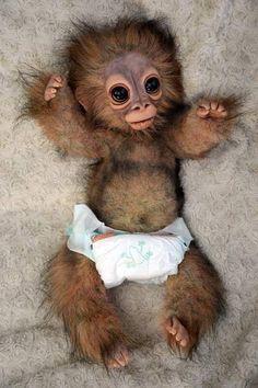 Risultati immagini per pongo monkey
