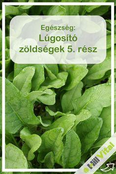 Lettuce, Paleo, Health Fitness, Vegan, Vegetables, Healthy, Food, Essen, Beach Wrap