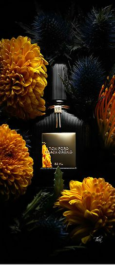 Tom Ford ● Black Orchid. Sensuous top notes of Black Truffle and Ylang mingled with fresh Bergamot and delectable Black Currant. Dramatic middle notes of dark, tempting Florals and rich Fruit Accords. The heart is deepened with intoxicating Lotus Wood. Decadent base notes of Patchouli, Incense and Vetiver. Vanilla Tears add a fluid of creaminess to warm Balsam and smooth Sandalwood.