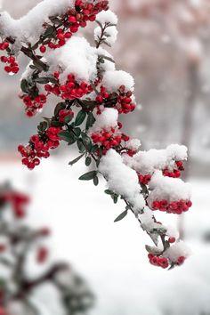 seasonalwonderment: November Snowfall ~ Photography by Amin Bazargani