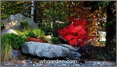Wbgarden japanese maples ... Japanese Maple, Sidewalk, Garden, Plants, Garten, Side Walkway, Lawn And Garden, Acer Palmatum, Walkway