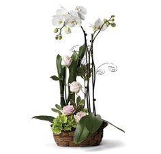 Composición paralela con orquídeas. www.interflora.es