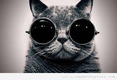 Gato gafas vintage
