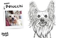 Meet Pelucchi   By Jonathon Chapman from Sketch Your Pet.  Copyright © 2013 Sketch Your Pet. Jonathon Chapman. All rights reserved.