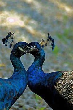 True Love by Jeff Palm Photography  http://urlz.fr/5Og