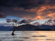 Papel de Parede - Árvore Solitária no Lago Wanaka - Nova Zelândia
