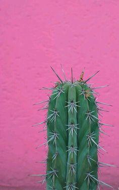 Color n cacti