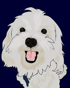 Capture your pet's colorful side with a pop art portrait from Superstudio on Etsy. Animal Paintings, Animal Drawings, Pop Art Portraits, Cat Photography, Dog Art, Maltese Dogs, I Love Dogs, Poodle, Cute Animals