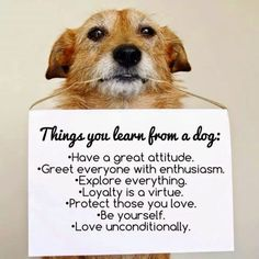 Consumer Psyche: Lessons from a dog