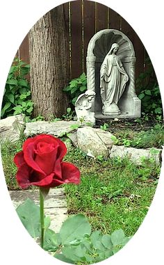 Our Grotto in the back yard featuring a beautiful red rose that bloomed on Our Lady's Saturday in June. www.divinemercyrosary.com