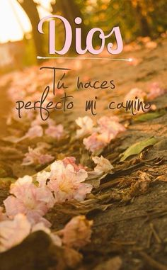 Dios tu haces perfecto mi camino.
