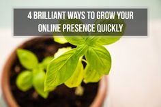 4 Brilliant ways to Grow Your Online Presence Quickly - John Mickevich Taking Pictures, Plant Leaves, Finding Yourself, Environment, Things To Come, Herbs, How To Get, This Or That Questions, Google Search