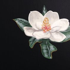 48 Magnolias by @Michael_Paulus   #LaddsonSpruce