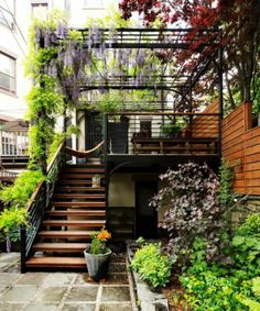 Prachtige wisteria op een patio