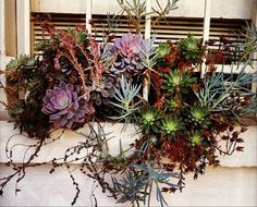 Window boxes for the Urban Gardener. I fell so in love with succulent arrangements in New Mexico.