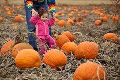 Pumpkin patch portrait idea