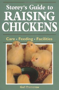 All you'll need to know about raising your own chickens!
