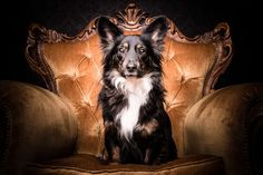 Adam Jackman-Moore from Australia took this regal portrait of his Long-Haired Dachshund. The Best Photos From the Kennel Club's Dog Photographer of the Year Contest 2015