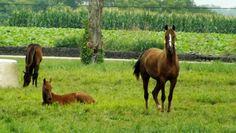 Undulata Farm