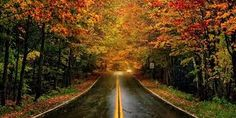 Image result for new england fall foliage 2017