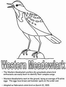 Free Printable Coloring Page Montana State Bird And Flower Western Meadowlark Bitterroot E Bird Coloring Pages Animal Coloring Pages Flower Coloring Pages
