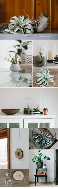 I love the look of air plants and I've become a bit obsessed with incorporating them into my home decor. Check out these tips for styling with and caring for air plants.