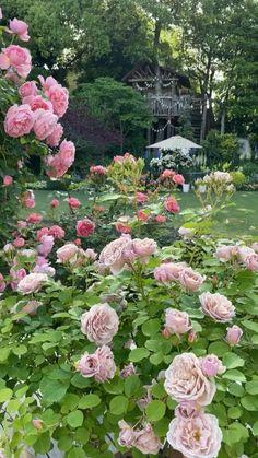 Dream Garden, Garden Art, Beautiful Gardens, Beautiful Flowers, Wedding Background Images, Serenity Garden, Flower Garden Plans, Gladiolus Flower, Garden Planters