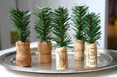 Mini evergreen trees in corks!