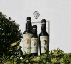 Olive Oil from Villa Stabbia - Organic of course http://www.organicholidays.co.uk/at/3088.htm