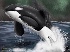 Orca favourites by MCsaurus on DeviantArt