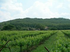 Remote Lands Toasts Asia's Top New Wineries - http://osaka-mega.com/remote-lands-toasts-asias-top-new-wineries/