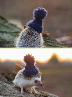 Pendleton the Hedgehog