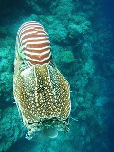 ✯ Palau Nautilus. www.travelbrochur...