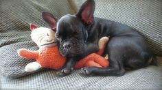 pets and their stuffed animals...