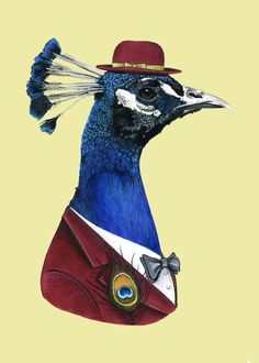 MoeSewCoMillinery: inspiration piece, berkleyillustration, Peacock print