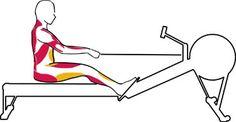 Comment ramer - Rameur Concept2 - Entraînement | Incept