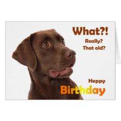 Image result for birthday images labrador