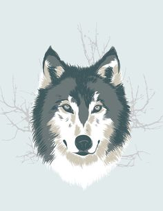 Wolf illustration. This is the first piece I made on the iPad using Adobe Ideas. It was a fun project, create all the layers, adding and subtracting the colors