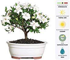 7 Houseplants With Secret Health Benefits Gardenia Plant Growing Gardenias Plants