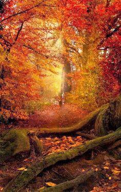 Stunning Views: Autumn