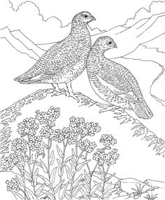 Alaska Coloring Pages To Print - Coloring Pages For All Ages