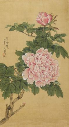 Chinese Peony Festiva Maxima - Home & Garden Botanical Drawings, Botanical Art, Botanical Illustration, Japanese Painting, Japanese Art, Gravure Photo, Paintings Tumblr, Chinese Flowers, Chinese Painting Flowers
