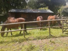 Horses grazing around the stable block today.
